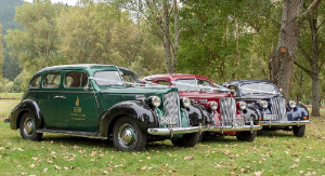 img-three-packard-wedding-cars-dressed-with-ribbon-746-774-501